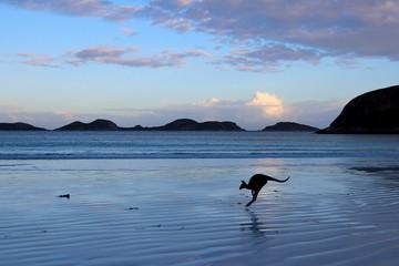 Photo sur Toile Kangaroo Lucky Bay Australia