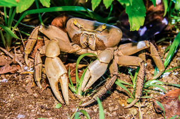 Crab in the ground