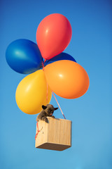adorable puppy flying with air balloons