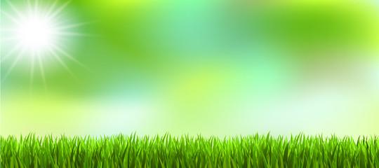 Gras Hinterland Sommer Frühling