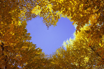 Heart from autumn leaves with blue sky inside