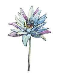 Graphic, flower of blue Egyptian lotus (water lily, Nymphaea caerulea, sacred lotus). Black and white outline illustration with watercolor hand drawn painting. Isolated on white background.