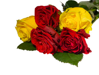 Beautiful red and yellow rose isolated on white background