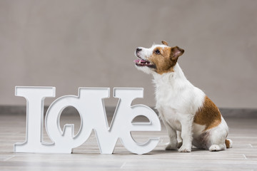 """Dog with the inscription """"Love"""""""