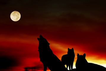 Pack of wolves with full moon over night sky like magic, mystic, spiritual animal concept