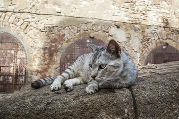 gato deitado no telhado