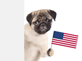 Pug puppy holding American flag in paw above white banner. isolated on white background