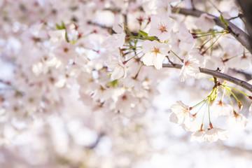 Flores y desenfoques