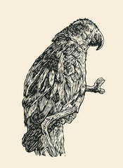 Parrot On A Branch. Engraving Style. Vector Illustration.