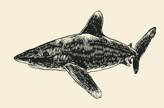 Shark. Engraving Style. Vector Illustration.