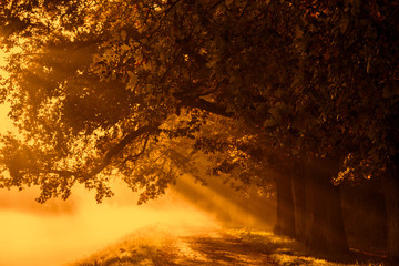 sunrise with rays on the background of a foggy mysterious path in the park