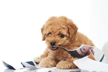 Puppy biting photo print