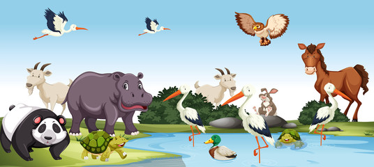 Various wild Animals scene