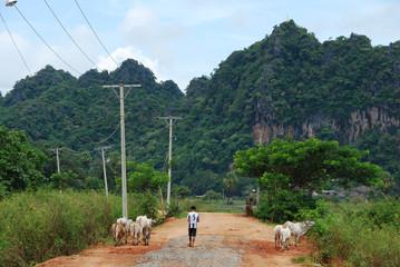 Campagne birmane près de Hpa-An, Birmanie