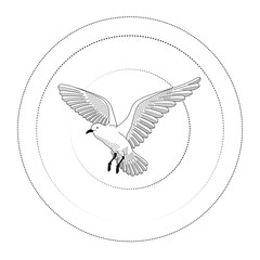 bird flying. illustration vector. hand drawing line art of animal. bird isolated line on white background. symbol of freedom. tattoo design. circle of life.