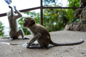 A monkey near the Batu Caves in Kuala Lumpur