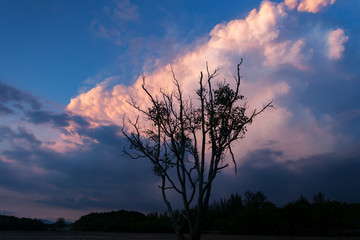 dead tree with dramatic sunset sky and clouds.