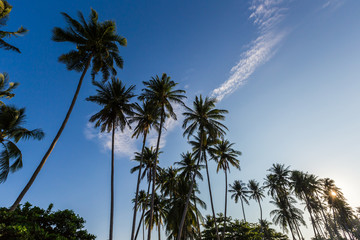 Tropical beach and coconut palms, Vietnam, Muine