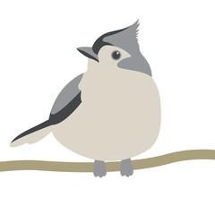 tit bird vector illustration flat style  front