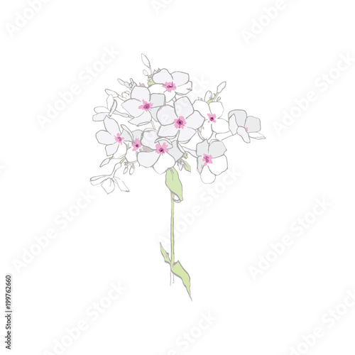 Phlox Are Sweet, Pink In Color White Garden Flowers Flower Print Flower  Postcard Wall Mural-soul_romance