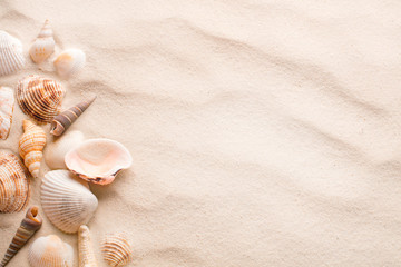 sand with seashell and starfish as blank textured background
