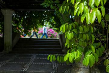The Botanic Garden in Kuala Lumpur