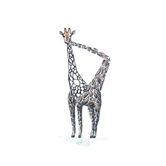 Giraffe eats their spots. Hand-drawn. A watercolor drawing. Close up. Isolated on white background