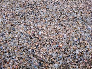 Muscheln an der Ostsee Küste