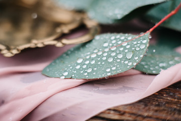 green leaves of a wedding decor with raindrops close-up, macro Wall mural