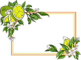 White rectangular background with lime.