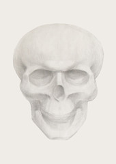 Drawing of a skull on paper. Pencil black and white drawing of a plaster skull.