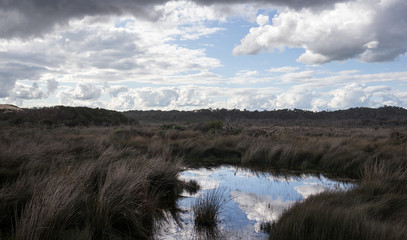 Cloudy sky reflected in an Australian marsh