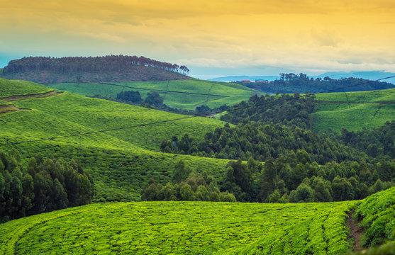 Landschaft in Afrika, Ruanda