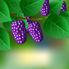 Blue, juicy, sweet mulberries on a branch for your design.