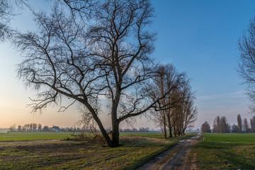 Rheinfeld am Morgen - 5379