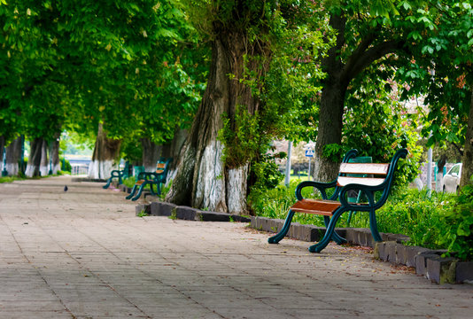 bench in the shade of chestnut alley