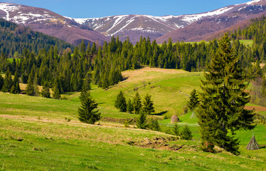 beautiful springtime landscape of Carpathians
