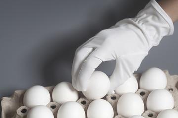 Hand in white glove holding chicken white eggs