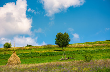haystack and a tree on the grassy field. beautiful summer countryside of mountainous area