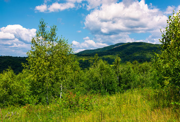 beautiful summer landscape in mountains. grassy meadow among the forest. bright blue sky with some clouds