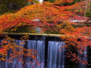 紅葉(布引の滝)