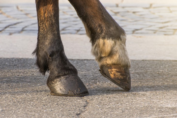 Two legs of a horse's hoof, one leg raised above the surface.