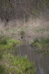 Water Slough