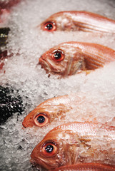 Red snapper for sale at a fish market