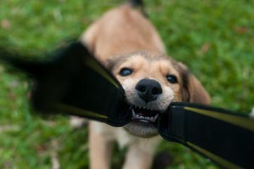 Cachorro brincalhão