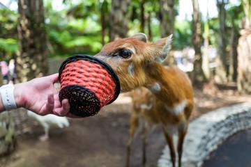 Deer at Bali Zoo in Indonesia