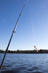 Fishing rod and lure