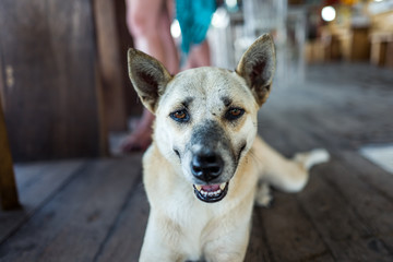 Street dog at cafe in Bali