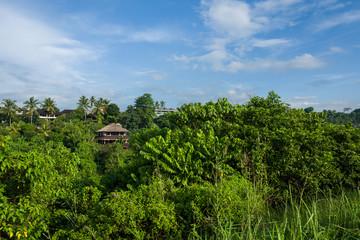 The Campuhan Ridge Walk in Ubud, Bali