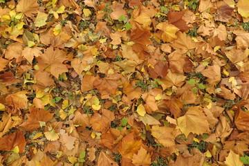 秋の湖と湖畔の公園の風景29